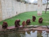 4-zoo-classe-04
